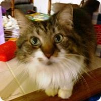Adopt A Pet :: Aurora - Ravenna, TX