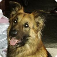 Adopt A Pet :: Buddie - Medford, MA