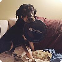 Adopt A Pet :: Harper - in Maine - kennebunkport, ME