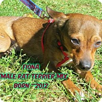 Rat Terrier Mix Dog for adoption in Huddleston, Virginia - Fiona