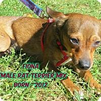 Adopt A Pet :: Fiona - Huddleston, VA