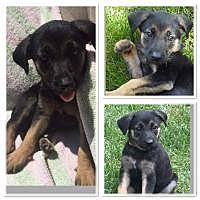 Adopt A Pet :: BELLA - Marlton, NJ