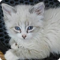 Adopt A Pet :: Mirage - Davis, CA