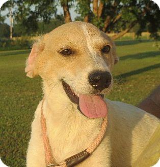 Labrador Retriever Mix Puppy for adoption in Allentown, Pennsylvania - Evan