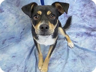 Terrier (Unknown Type, Small) Mix Dog for adoption in Hawthorne, California - Sonny