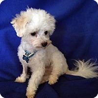 Adopt A Pet :: Einstein - Encino, CA