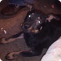 Adopt A Pet :: Kingston - E. Greenwhich, RI