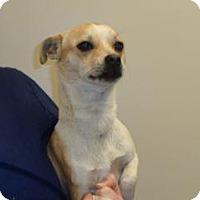 Adopt A Pet :: Mike - Wildomar, CA