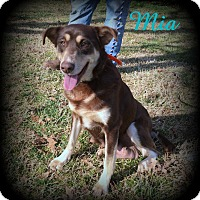 Adopt A Pet :: Mia - Denver, NC