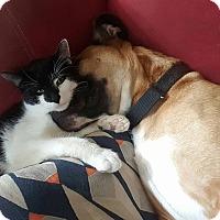 Adopt A Pet :: Chester - Athens, GA