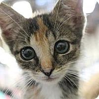 Adopt A Pet :: aliana - Santa Monica, CA