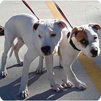 Adopt A Pet :: Baby Boy - Kingwood, TX