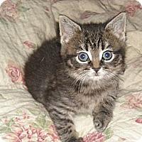 Adopt A Pet :: Teva (and Tiki) - Arlington, VA