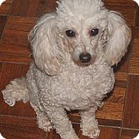 Adopt A Pet :: Kissee - House Springs, MO