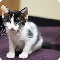 Adopt A Pet :: Gretel - Chicago, IL