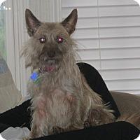 Adopt A Pet :: Lucy - Franklin, VA
