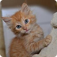 Adopt A Pet :: Leesette - Davis, CA