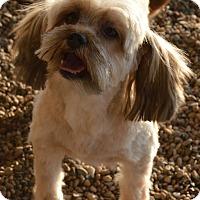 Adopt A Pet :: Julia - Prole, IA