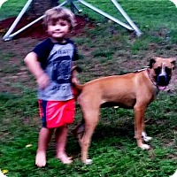Adopt A Pet :: Britt-Adopted! - Turnersville, NJ