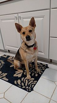 Shepherd (Unknown Type)/Shepherd (Unknown Type) Mix Dog for adoption in LANSING, Michigan - Selma