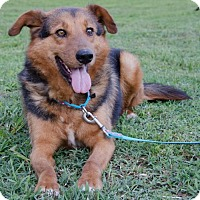 Adopt A Pet :: Tommy - Midlothian, VA