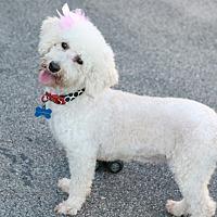 Adopt A Pet :: Sugar - CHESTERFIELD, MI