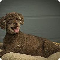Adopt A Pet :: Sunny - Windsor, CA