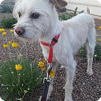 Adopt A Pet :: Tobias - Las Vegas, NV