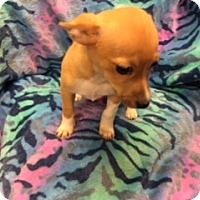 Adopt A Pet :: AZNI - Elk Grove, CA