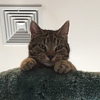 Adopt A Pet :: Dean - Lafayette, NJ