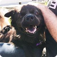 Adopt A Pet :: Candy - Marina del Rey, CA