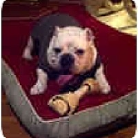 Adopt A Pet :: Dozier - conyers, GA