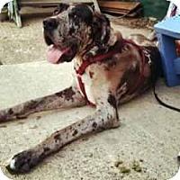 Adopt A Pet :: Jandsson/Jaxson - Inver Grove Heights, MN