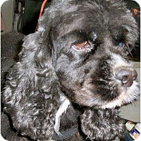 Adopt A Pet :: Eddie - Menomonee Falls, WI