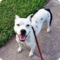 Adopt A Pet :: Blossom - Orlando, FL