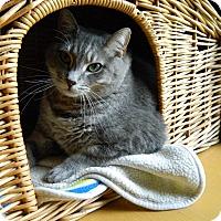 Adopt A Pet :: Tina - Jupiter, FL