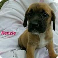 Adopt A Pet :: Kenzie - Marlton, NJ