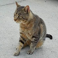Adopt A Pet :: Charlie - Stanhope, NJ