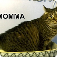 Adopt A Pet :: Momma - Medway, MA