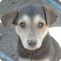 Adopt A Pet :: Kitty's Kisses - Las Vegas, NV