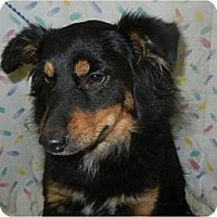 Adopt A Pet :: Woofy Goldberg ADOPTED!! - Antioch, IL