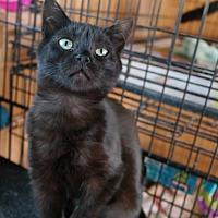 Adopt A Pet :: JACK - San Pablo, CA