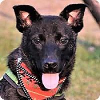 Bernese Mountain Dog Mix Dog for adoption in San Francisco, California - Danny