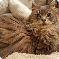 Adopt A Pet :: Amelia - Springfield, OR