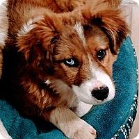 Adopt A Pet :: Louise - Baltimore, MD