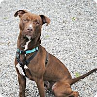 Adopt A Pet :: THEO - Linden, NJ