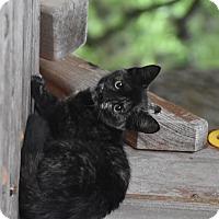 Adopt A Pet :: Hazel - San Antonio, TX
