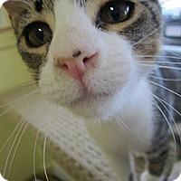 Adopt A Pet :: Jason - Bunnell, FL