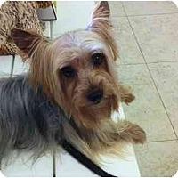 Adopt A Pet :: Charlie Brown - West Palm Beach, FL