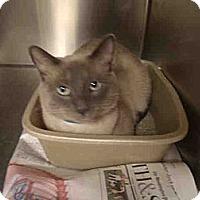 Adopt A Pet :: Robert - Arlington, VA